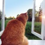 Рыжий кот на окне
